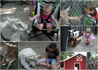 Fritz Park Petting Farm