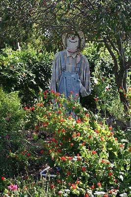 Henrietta Apple Orchard :: Welcoming Fall
