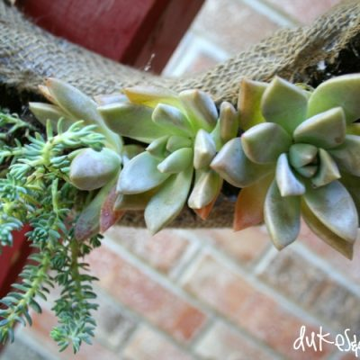 How to Make a Succulent Living Wreath