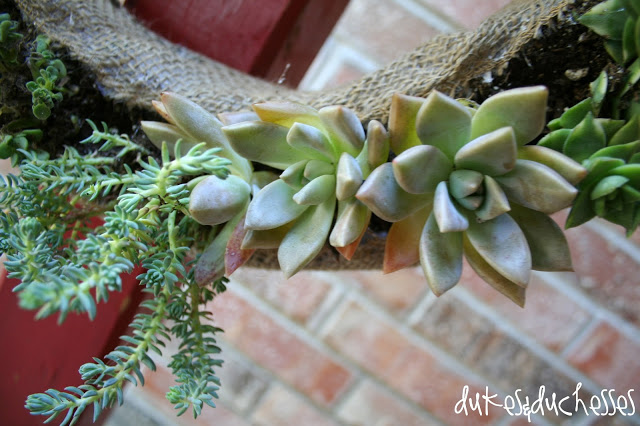 how to make a living wreath from succulents #wreathhoa