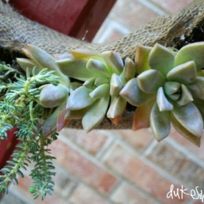 How to Make a Living Wreath from Succulents