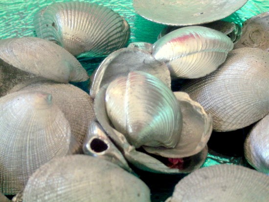 shell crafts :: shells painted chrome