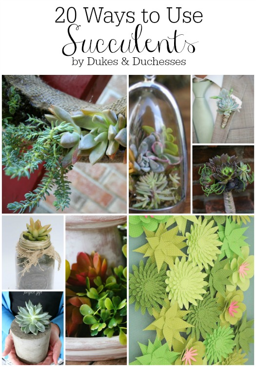20 ways to use succulents