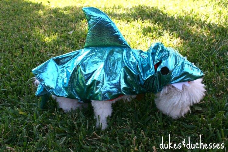 shark costume for dog