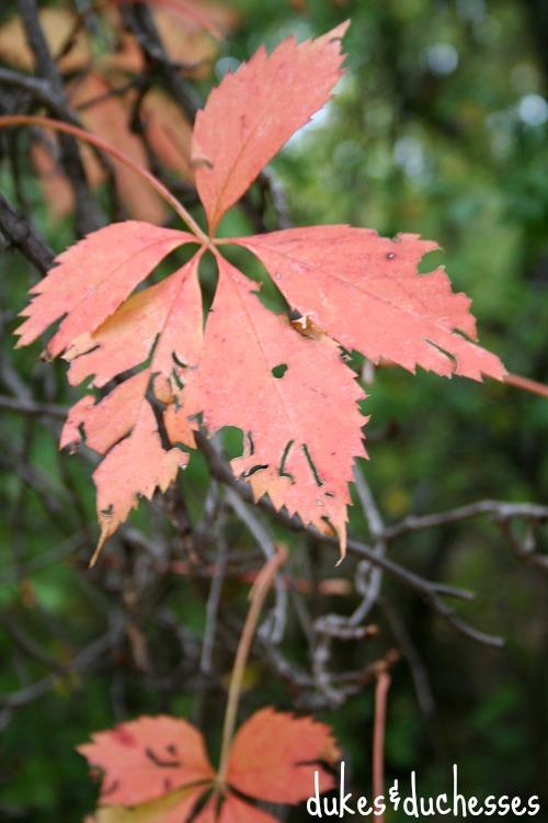 fall foliage for a fall picnic