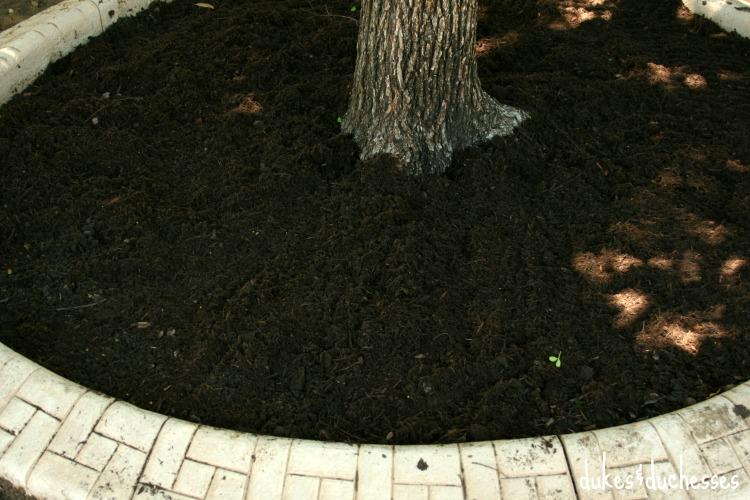 miracle gro soil in garden