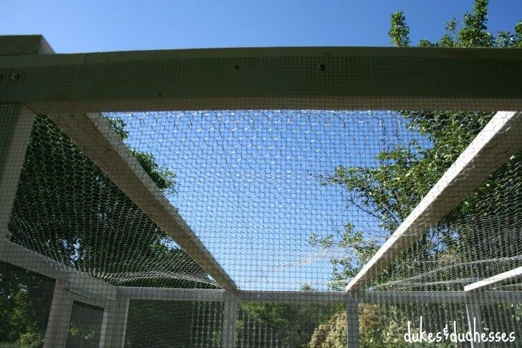 wire mesh protecting chicken run