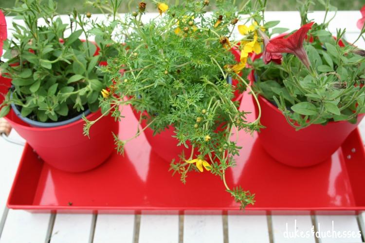 potted plant centerpiece