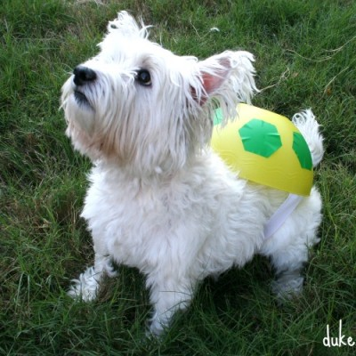 A Simple DIY Turtle Costume for the Dog