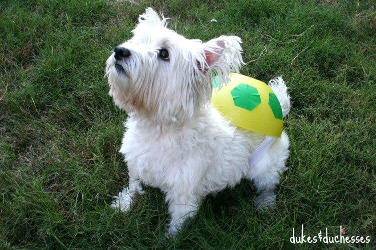a DIY turtle costume