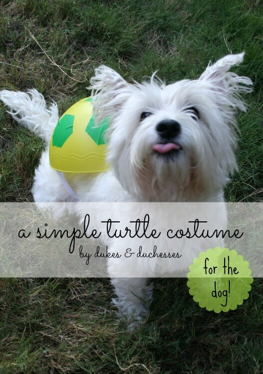 turtle costume for a dog