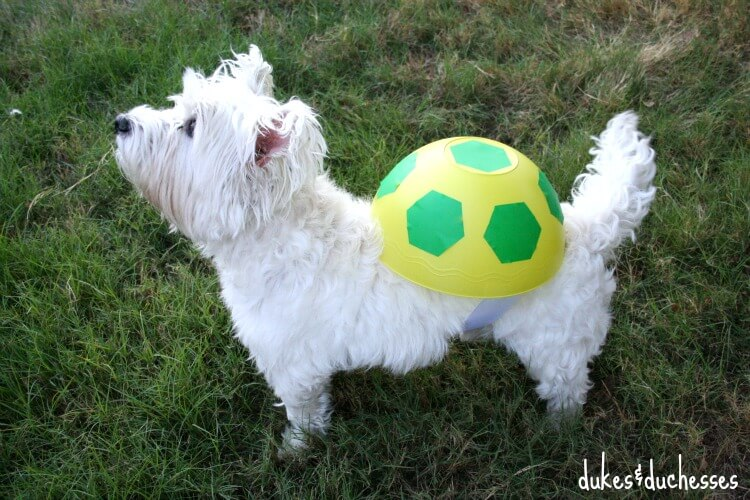 a turtle pet costume & A Simple DIY Turtle Costume for the Dog - Dukes and Duchesses