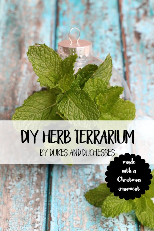 DIY herb terrarium made from a plastic ornament