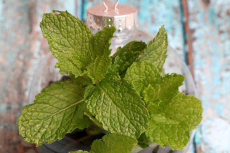 DIY Herb Terrarium