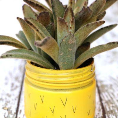 Pineapple Succulent Planter
