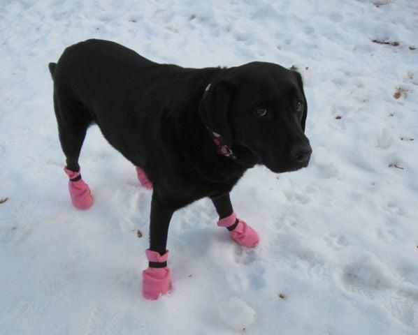 DIY dog booties