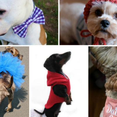 10 DIY Dog Clothes Patterns
