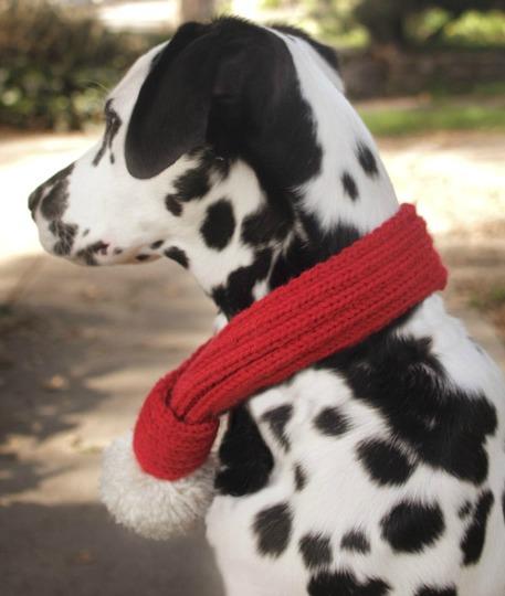 DIY dog scarf with pom pom