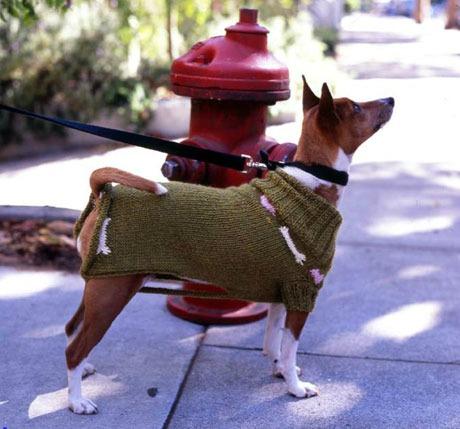 DIY knit dog coat