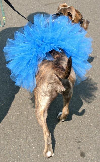 easy DIY dog tutu