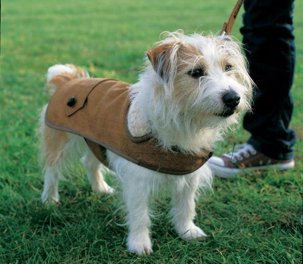 tweed coat for dogs