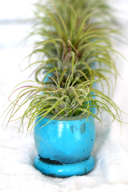 air plant holders made from vintage spindle