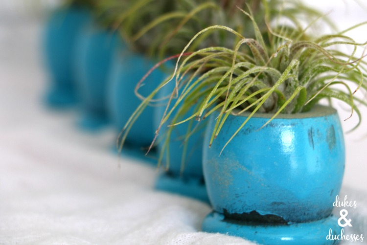 upcycled air plant holders