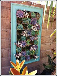 framed succulent garden