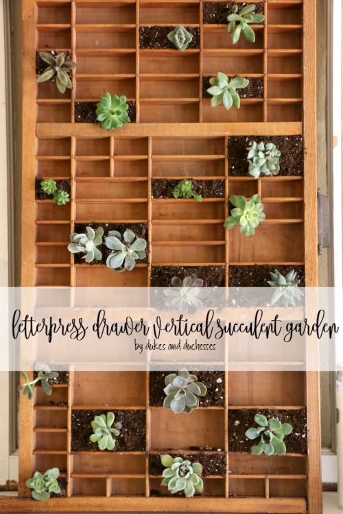 letterpress drawer vertical succulent garden