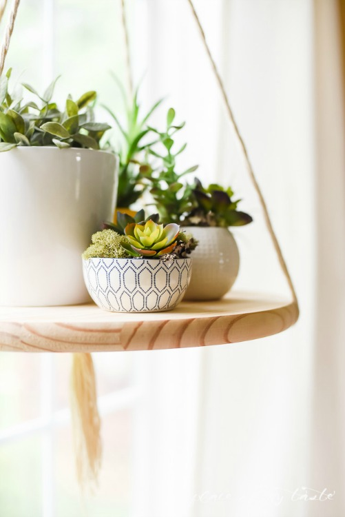 DIY floating shelf with succulents