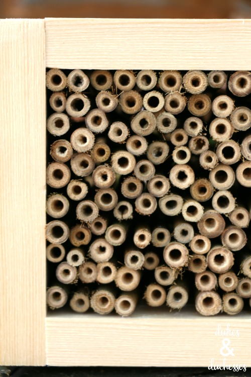 bamboo pieces in bee house
