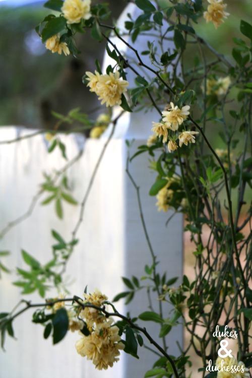 flowering vine on garden bench