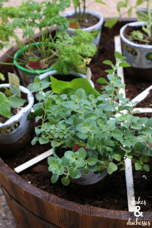 herb and vegetable plants for pizza garden