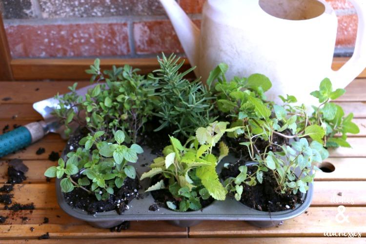 herbs in repurposed muffin tin