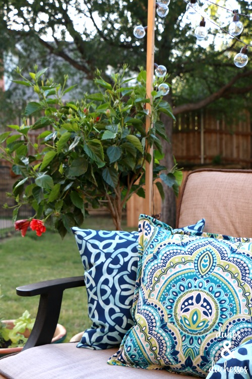 hibiscus flowering plant with colorful pillows