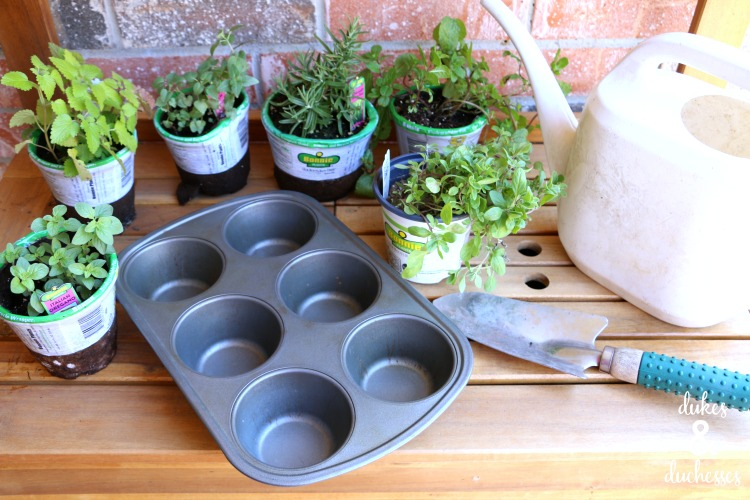 muffin tin herb garden supplies