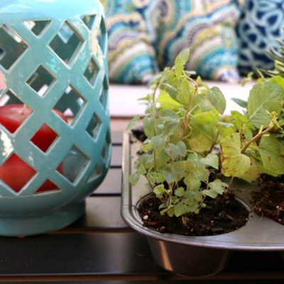 Muffin Tin Herb Garden