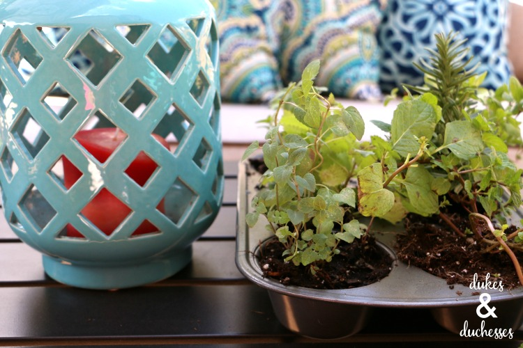 repurposed muffin tin herb garden