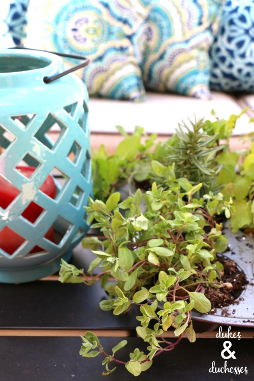 upcycled herb garden in a muffin tin