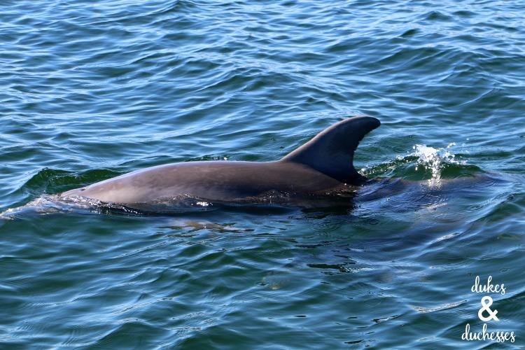 dolphins at panama city beach florida
