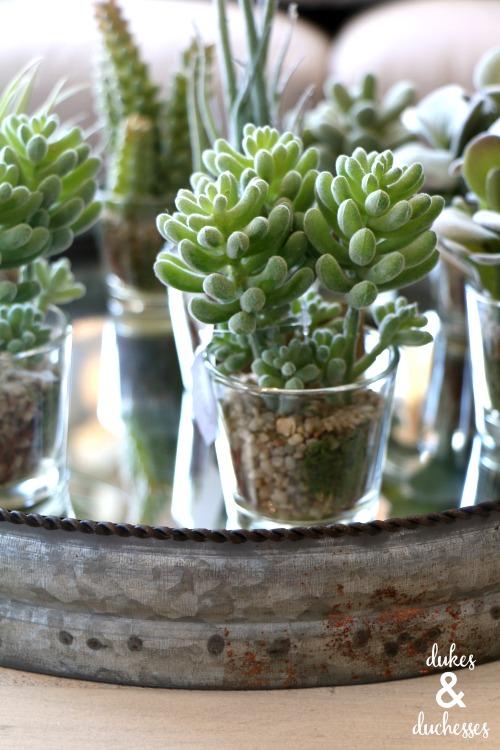 succulent display at 13 hub lane