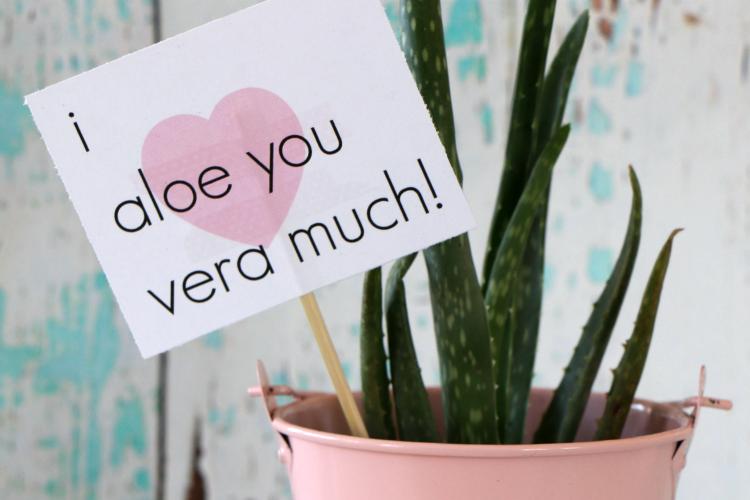 Aloe Vera Gift Idea with Printable