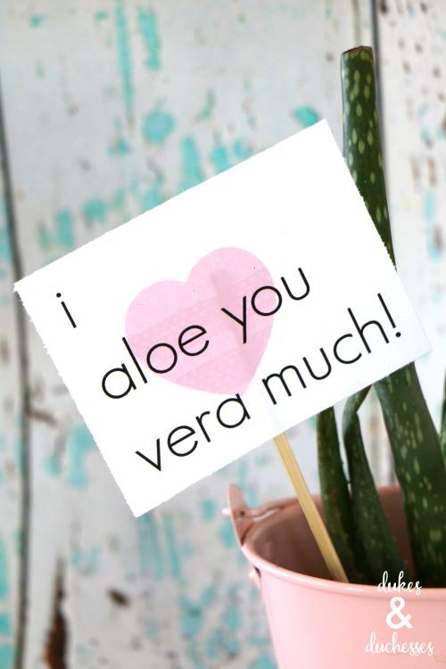 aloe vera valentine's day gift and printable