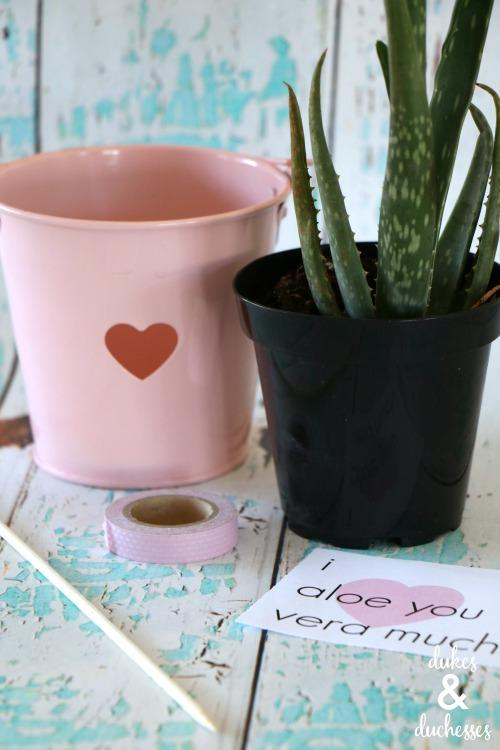 aloe vera valentine's day gift