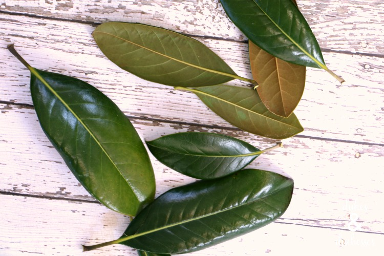 magnolia leaves for crafting