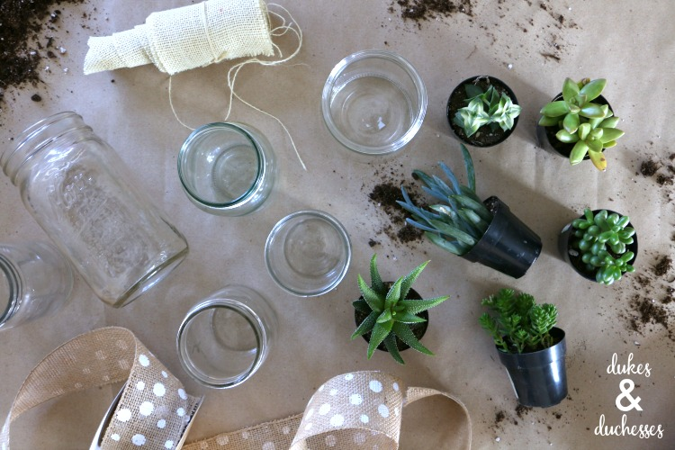 how to host a succulent planting party