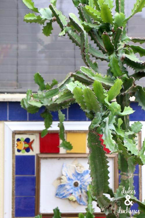 cacti austin texas