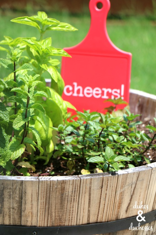 beverage or cocktail garden ideas