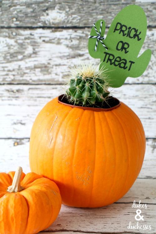 cactus gift idea
