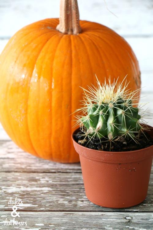 cactus halloween gift idea